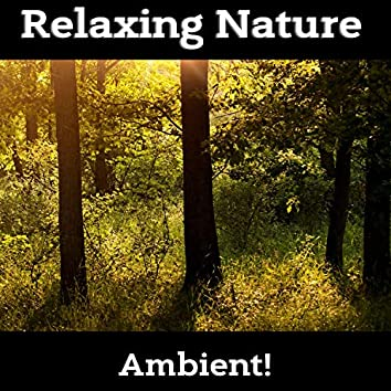 Relaxing Nature Music, Chill & Relax