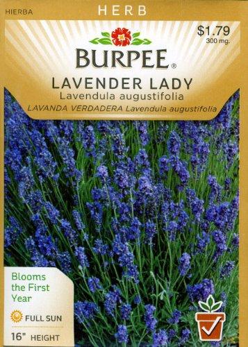 Burpee 66050 Herb Lavender Lady Seed Packet