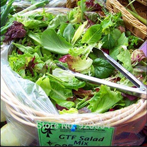 Les semences importées, 200pcs/lotlettuce, salade rouge b & bonsaïs graines mixtes légume vert plante bricolage jardin maison livraison gratuite