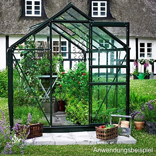 HALLS Gewächshaus Popular106 319x193cm 6,2m² grün 3mm Blankglas