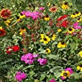 Outsidepride Southeast Wildflower Seed Mix