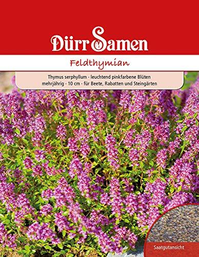 Dürr Samen 4520 Feldthymian (Feldthymiansamen)