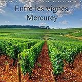 Entre les vignes Mercurey