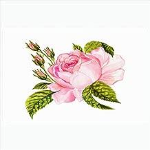 Best william morris rose bush Reviews