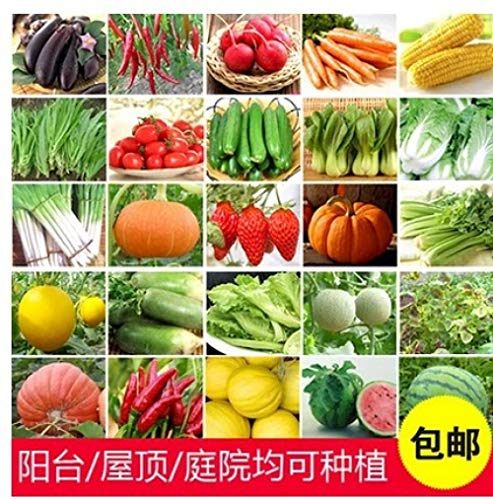 Aerlan Blüten Saatgut mehrjährig,Balkon Hof Gemüse und Obst Raps Gemüsesamen Paket-Senf 200,Blumensamen mehrjährig