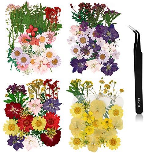 EEEKit 132 Piezas Flores Prensadas Secas Reales Juego de Hojas y Flores Secas Múltiples Mixtas para Scrapbooking DIY Vela...