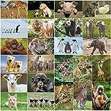 EDITION COLIBRI - Set di 24 cartoline con animali (24 diverse cartoline di animali) di sim...