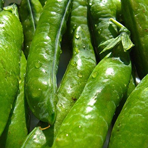Sugar Ann Snap Pea Garden Seeds - 1 Lbs - Non-GMO