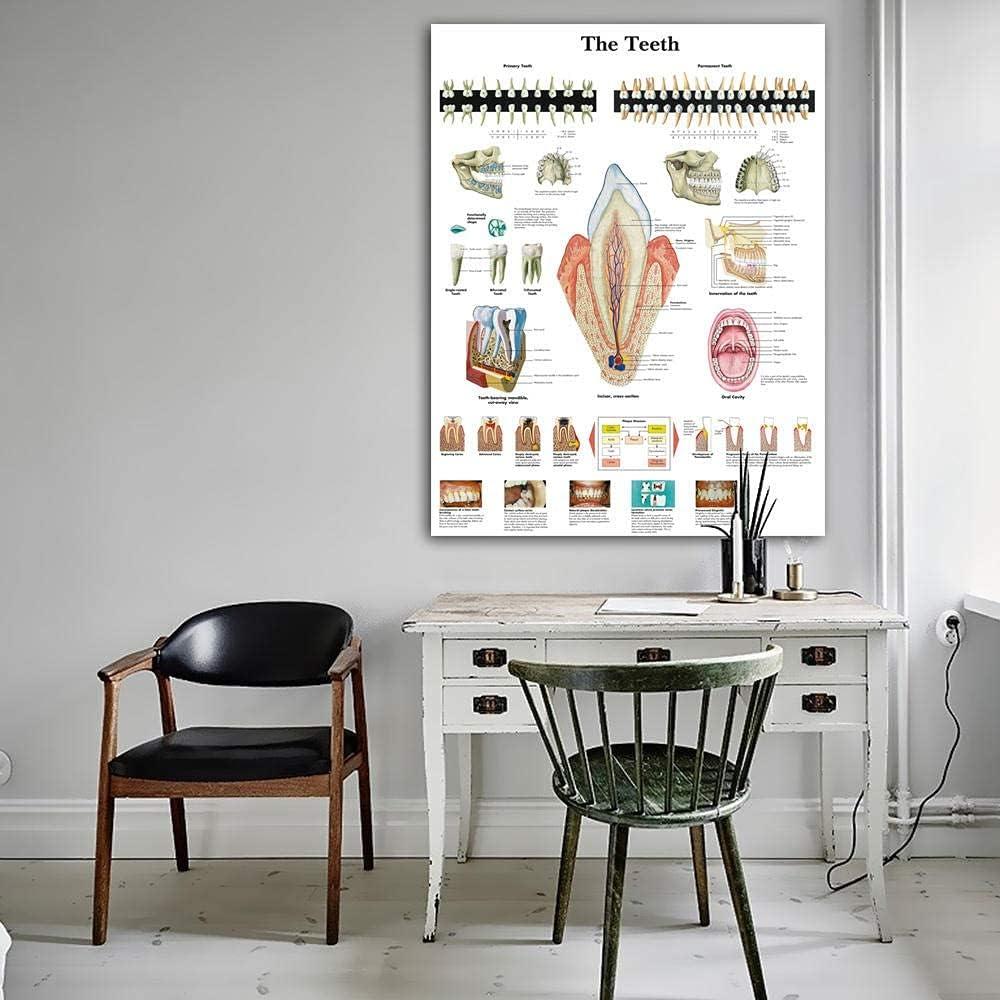 QUEELI Anatomical Minneapolis Mall Baltimore Mall Charts Human Teeth Chart Clinic Poster Canvas