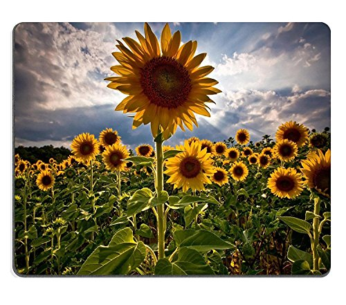Sunflowers Flower Fields Nature Cloudy Sky Mouse Pads Customized Made to Order Support Ready 9 7/8 Inch (250mm) X 7 7/8 Inch (200mm) X 1/16 Inch (2mm) Eco Friendly Cloth with Neoprene Rubber Luxlady Mouse Pad Desktop Mousepad Laptop Mousepads Comfortable Computer Mouse Mat Cute Gaming Mouse pad