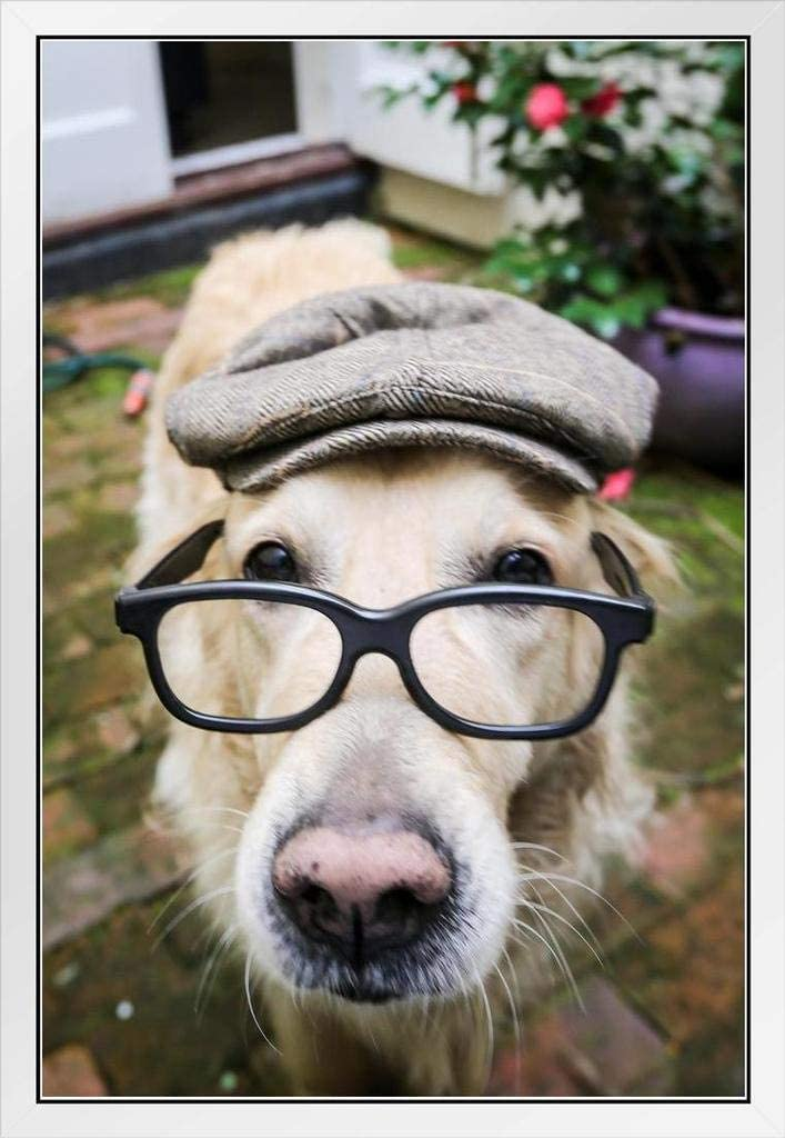 Dog Wearing Flat Regular dealer Cap Detroit Mall and Glasses for Funn Wall Photo Posters