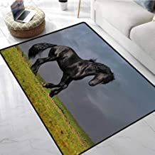 Horse Decor Rugs for Sale Black Friesian Stallion Gallop in Sunset Stormy Weather Nature Outdoors Anti-Slip Cooking Kitchen Carpets 24 X 36 Inch