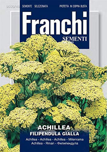 Portal Cool Franks - Fdbf_ 300-40 - Achillea filipendulina jaune - Graines