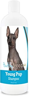 Healthy Breeds AmericanHairlessTerrier Young Puppy Soap-Free, Degerent-free, Tearless, Baby Powder Scent Shampoo 8oz