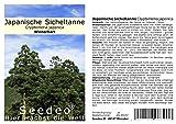 Seedeo® Japanische Sicheltanne (Cryptomeria japonica)...