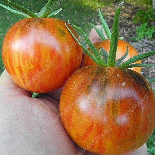 1 paquet de 100 graines/Paquet vivace tomate arbres géants serre en plein air disponibles Tomate Heirloom Seeds En Bonsai Livraison gratuite Autre