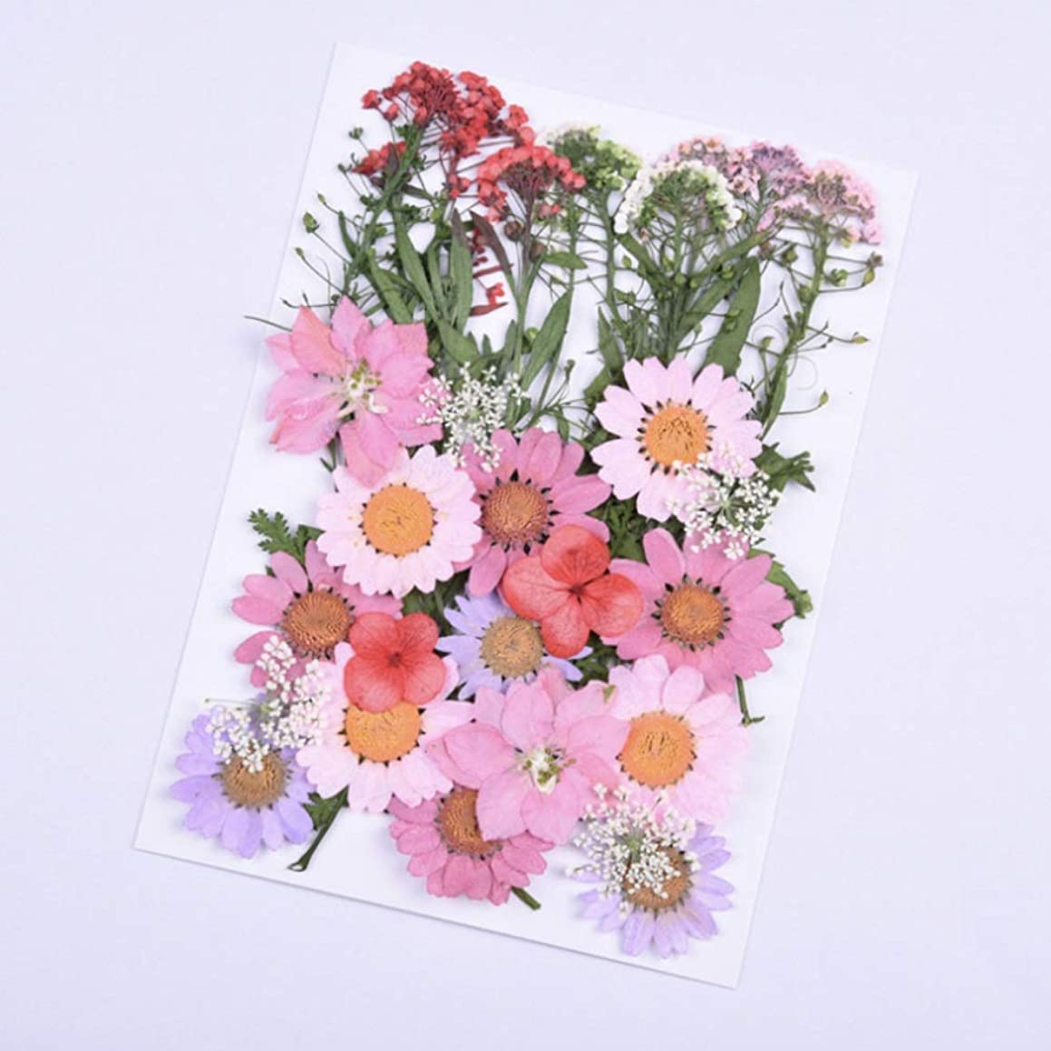 CheeseandU Real Mixed Multiple Dried Pressed Flowers, Mini Rose, Daisy, Larkspur, Queen Anne's Lace Hydrangea Alyssum Leaves Natural Pressed Flowers For Art Craft DIY Resin, 35PCS