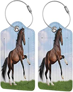 Durable luggage tag Animal Decor Bay Horse Pacing on the Grass Energetic Noble Character of the Nature Honor Concept Unisex Blue Green Brown W2.7