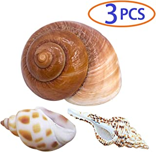 BLSMU Hermit Crab Shells,Hermit Crab Supplies,Conch Shape Decorate for Fish Tank,Aquarium,Hermit Crab Cage,3 Pcs Different Types,Natural Seashells No Painted Changing Shells Growth Shell