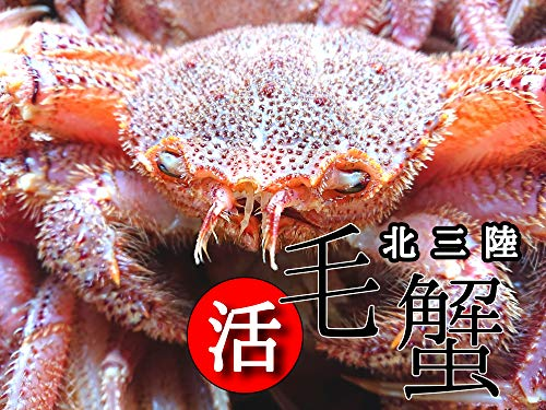 産直丸魚 岩手洋野町産 【活】 毛ガニ 1杯(350g) 北三陸の身入りの良い毛ガニです   毛蟹 毛がに けがに ケガニ カニ かに
