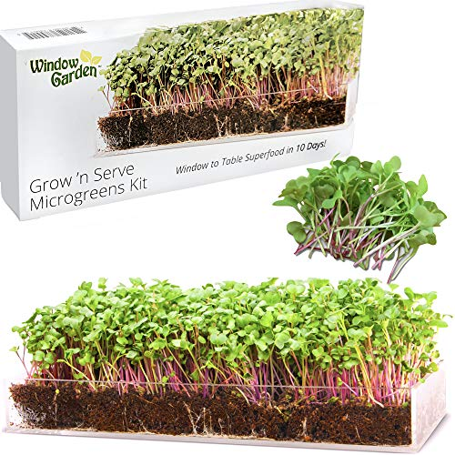 Window Garden – Microgreens Kit, Seeds to Fresh Greens. Complete Superfood Microgreen Growing Kit with Stylish Acrylic Tray. Live Indoor Plant, Nutritious for Salad, Sandwich, Emergency Survival Food