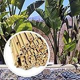HAPPERS Valla Bambú Natural para Jardín o Terraza. Rollo de cañas de...