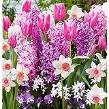 40x Bulbes de fleurs - Mix BORDER GARDEN PINK | Chionodoxa + Narcissus + Hyacinthus + Tulipa | Fleurs roses | Bulbes à floraison précoce | Plantes fleuries vivaces