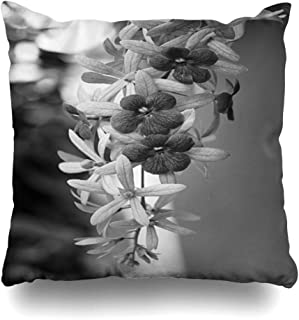 Ahawoso Throw Pillow Cover Square 18x18 White Bloom Petrae Volubilis Purple Flower Nature Ancient Buddhism Buddhist Petrea Plant Queens Design Zippered Cushion Case Home Decor Pillowcase