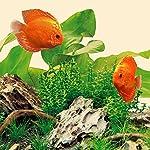 Juwel-Aquarium-86824-LED-Nature-Rhre