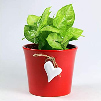 Paudhe Se Yaari Hanging Heart Planter Pot for Small Plants Succulents Cactus. Red Ceramic Porcelain Bone China Flower Container for Home Office Desk Tabletop Restaurant Décor.
