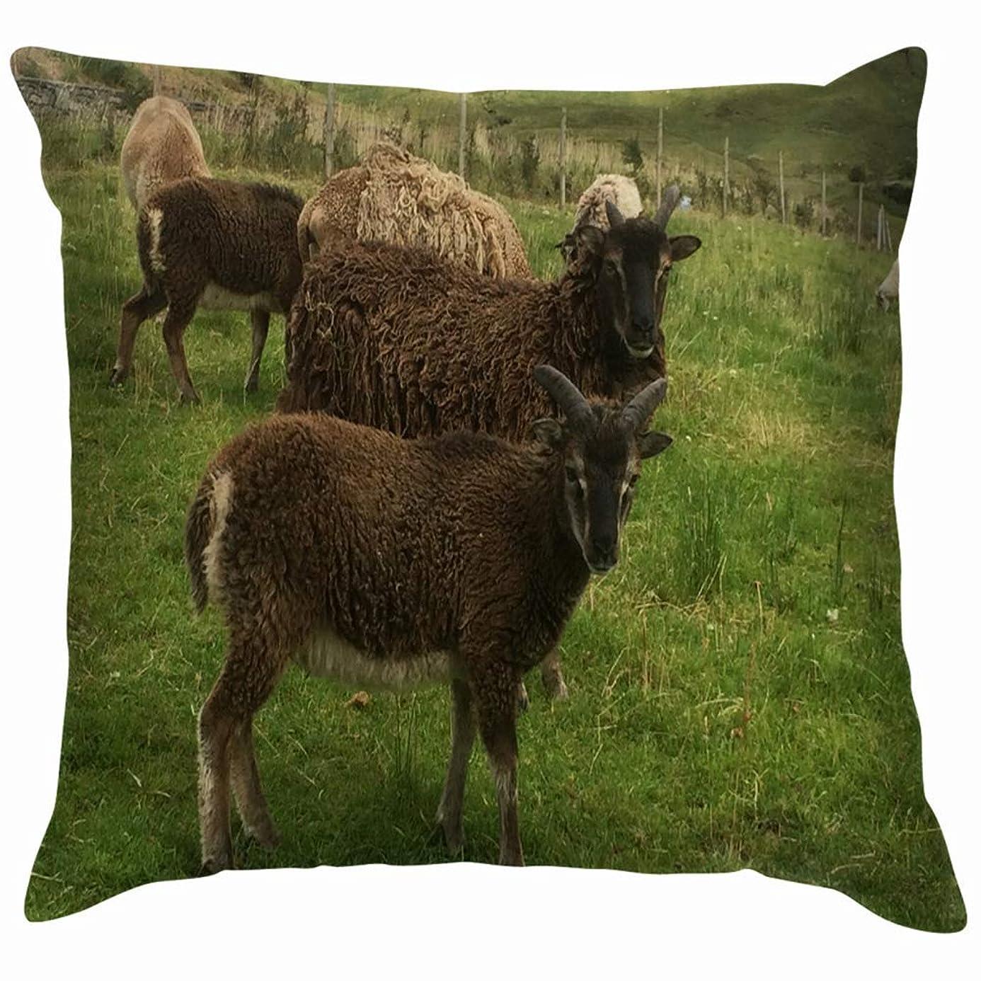 大いに電圧緑エニスアイルランド2018羊野外動物野生生物農業自然投げる枕カバーホームソファクッションカバー枕カバーギフト45x45 cm