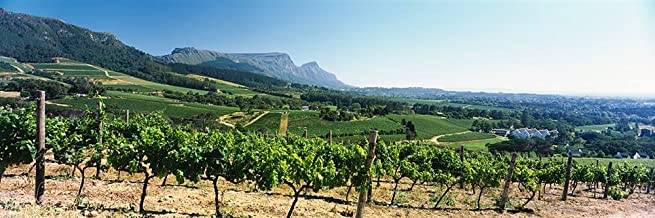 Walls 360 Peel & Stick Wall Mural: Vineyard Constantiaberg Range Table Mountain (48 in x 16 in)