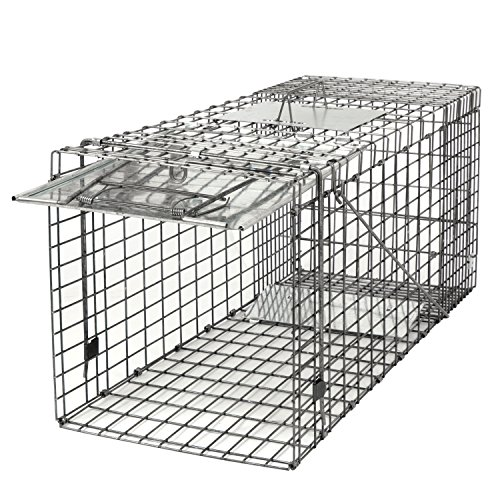 JungleA 32 Inches Cage Trap 1-Iron Door Foldable Live Animal Trap Catch Release Humane Rodent Cage for Raccoons, Cats, Groundhogs, Opossums