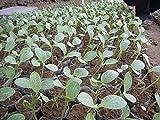 ¡¡¡El precio más bajo!!! semillas de frutas ornamentales, semillas de calabaza no son comestibles, amarilla preciosa hermosa del kumquat melón, alrededor de 50 partículas