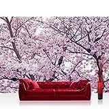 Vlies Fototapete 416x254cm PREMIUM PLUS Wand Foto Tapete Wand Bild Vliestapete - Pflanzen Tapete Apfelblüten Kirschblüten Baum natural - no. 3529