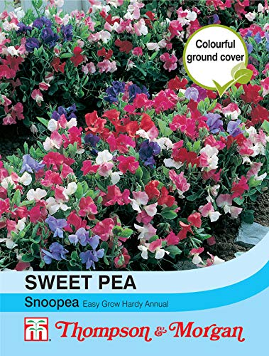 Portal Cool Thompson & Morgan Sweet Pea Snoopea Graines