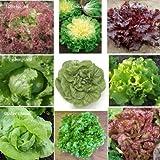 9 Arten - Schönes Salat Set - 2250 Samen