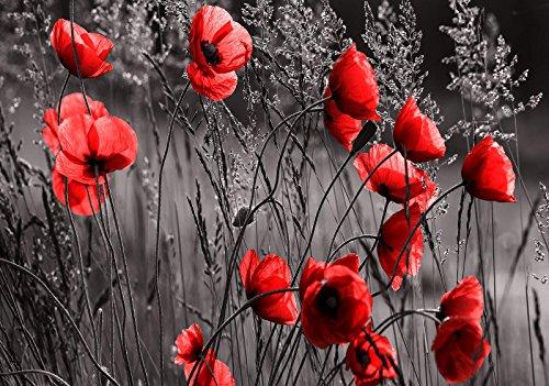 Mural 11763_P-MS, fotobehang, behang, muurschildering wereld-der dromen | klaprozen | fotobehang, fotobehang, muur, 11763_P-MS, veld weide, bloem, klaprolen, natuur, fotobehang Natuur P4 (254cm. x 184cm.) rood, zwart, wit