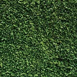 SJOLOON 8X8ft Green Leaves Backdrop Grass Backdrop Natural Green Lawn Party Photography Backdrop Birthday Newborn Baby Lover Wedding Photo Studio Props 10923