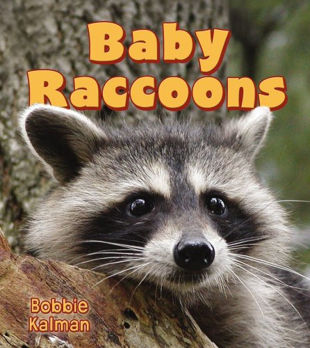 Baby Raccoons (It's Fun to Learn About Baby Animals)