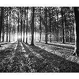 decomonkey Fototapete selbstklebend Wald 294x210 cm XL Selbstklebende Tapeten Wand Fototapeten Tapete Wandtapete klebend Klebefolie Landschaft Natur schwarz weiß