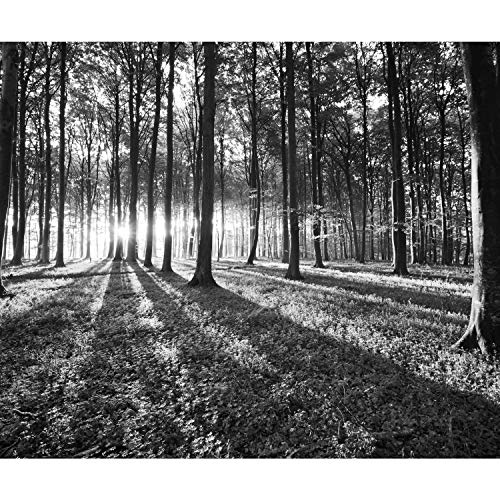decomonkey Fototapete Wald 350x256 cm XL Tapete Wandbild Wandbild Bild Fototapete Tapeten Wandtapete Wandtapete Landschaft Baum Natur schwarz weiß