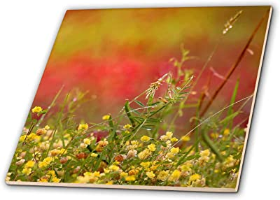 Nature Photograph of a Field Covered in Weeds and Tiny Yellow Flowers - T-Shirts 3dRose Stamp City