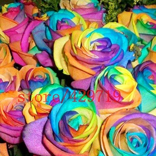 200 RAINBOW rose graines Rare Hollande Rainbow Rose Fleur Amant multi-couleurs Plantes jardin arc rare rose graines de fleurs