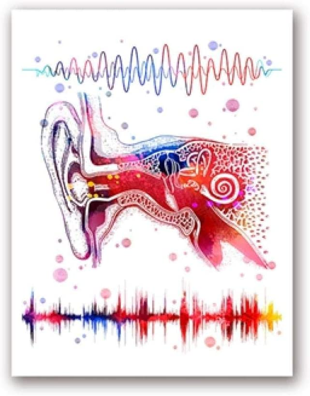 OíDo Sistema Lienzo Poster Impresiones MéDico AnatomíA Pared Arte Binaural AudicióN Arte Audio Ola Pintura ClíNica MéDico Decoracion Cuadros 30x40cm No Marco