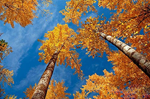 Jigsaw Puzzles 1000 Pieces Creativity DIY Puzzles Imagine Toys Fall Trees Educational Toy For Kids and Adults Wooden Assembling