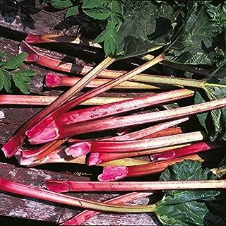 Rhubarb - Glaskins Perpetual - 40 Seeds