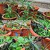 TedGem Kit Irrigation Goutte à Goutte, d'arrosage automatique système DIY Avec arrosage Micro Arroseur et 20m Tuyaux, pour jardin serre potager pelouse #4