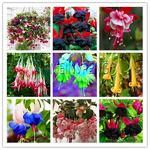 Generic Fresh 100 Stück Fuchsia Blumensamen zum Pflanzen gemischt 4