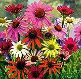 Beautytalk-Garten Buntes Sonnenhut Blumensamen Staudenbeet-Mischung Bienentraum Blume- Mischung Sonnenblumen Samen mehrjährig für Balkon/Terrasse/Garten